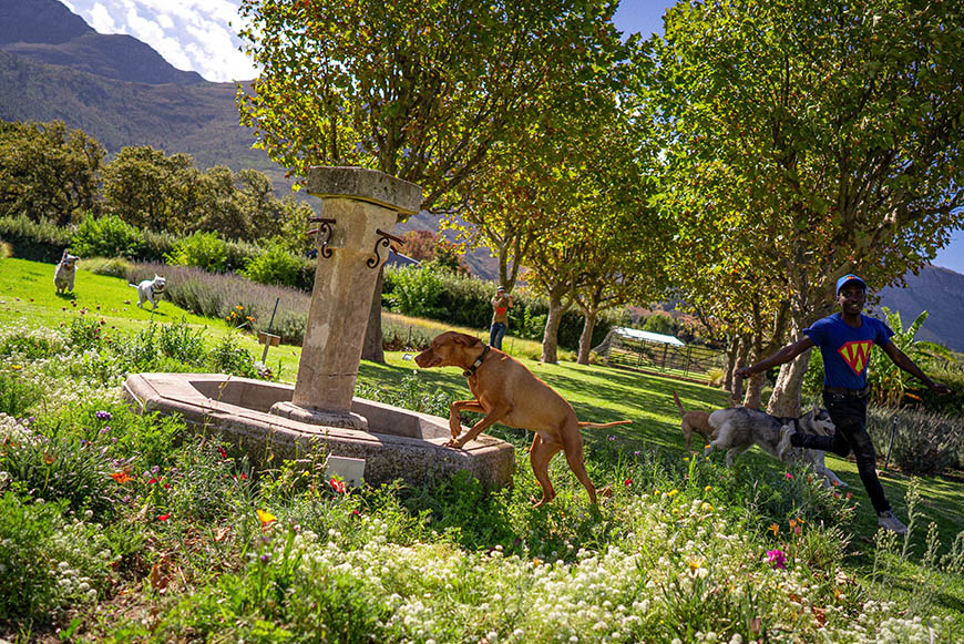 PLaying around the fountain at SUPERWOOF dog hotel in Franschhoek