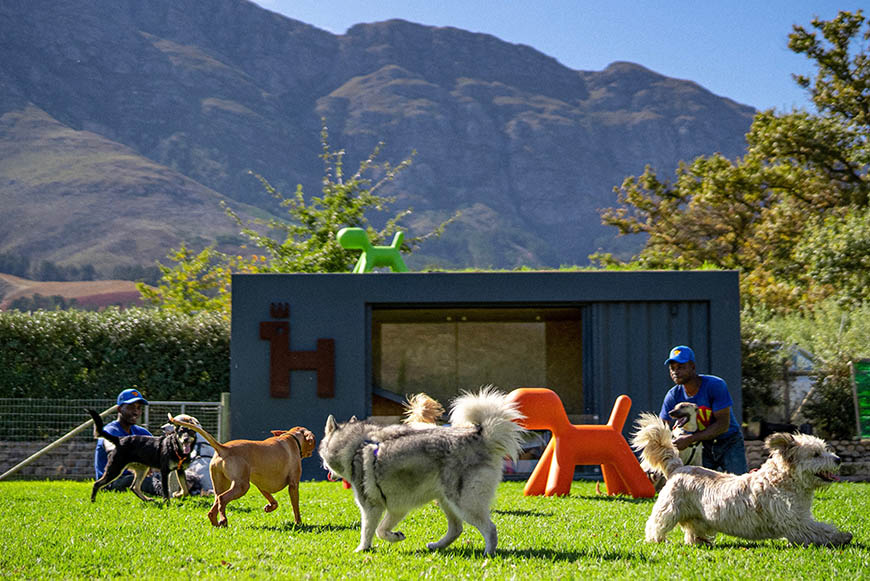Mountain backdrop at SUPERWOOF dog hotel and day care in Franschhoek