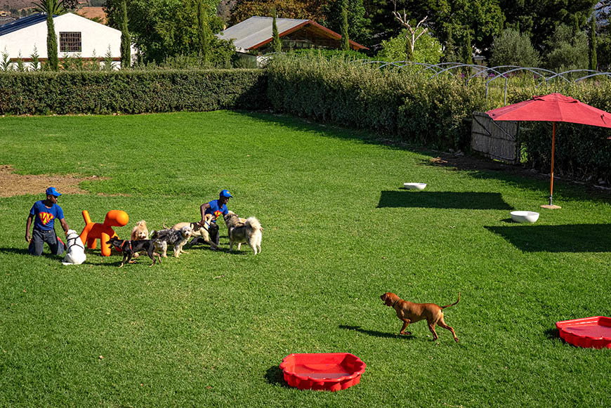 Outdoor pet supervision at SUPERWOOF dog hotel