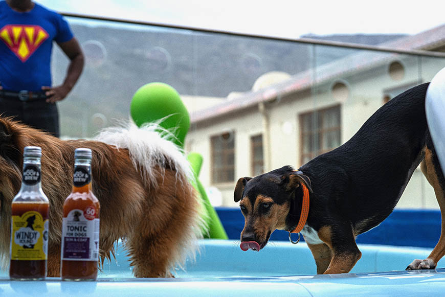 Lounging around the pool with refreshments at SUPERWOOF dog hotel